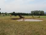 Cross Country Schooling at ACE Cross Country XC Gloucestershire