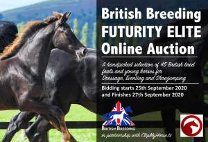 Auction-graphic