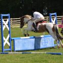13.2hh 7 year old mare with huge potential for lwvtb
