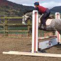 15.1hh, Anglo Arab x Knabstrupper, 6 year old, dapple grey mare.