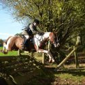 Cracking hunting/pony club pony