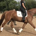 Beautifully bred young dressage mare, training ability and temperament to die for