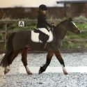 Acorn 11.2 pony for sale