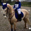 12.2 Beautiful Palomino Pony Club / Established Hunting Pony