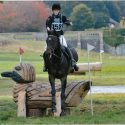 Beautiful thoroughbred with all-round experience: 16-year old, 16.1 dark bay gelding