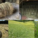 FOR SALE. Small round, organic, wildflower meadow hay bales.
