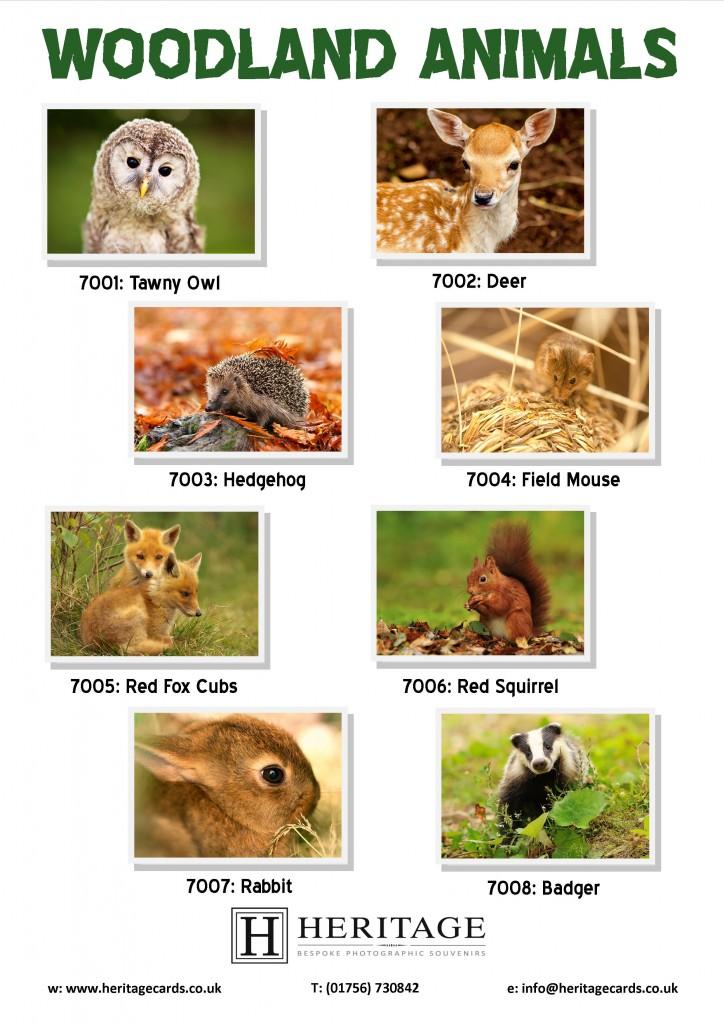 Woodland Animal Cards Heritage Cards Amp Souvenirs Ltd