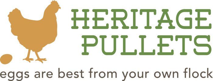 Heritage Pullets