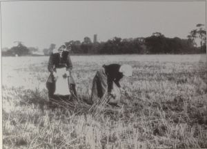 AOS P 0638 Harvesting
