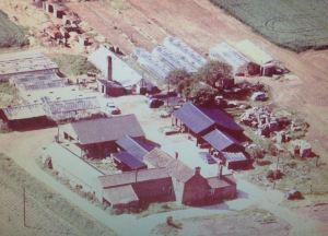 ASO P 1919 glenside nurseries west pinchbeck 1962