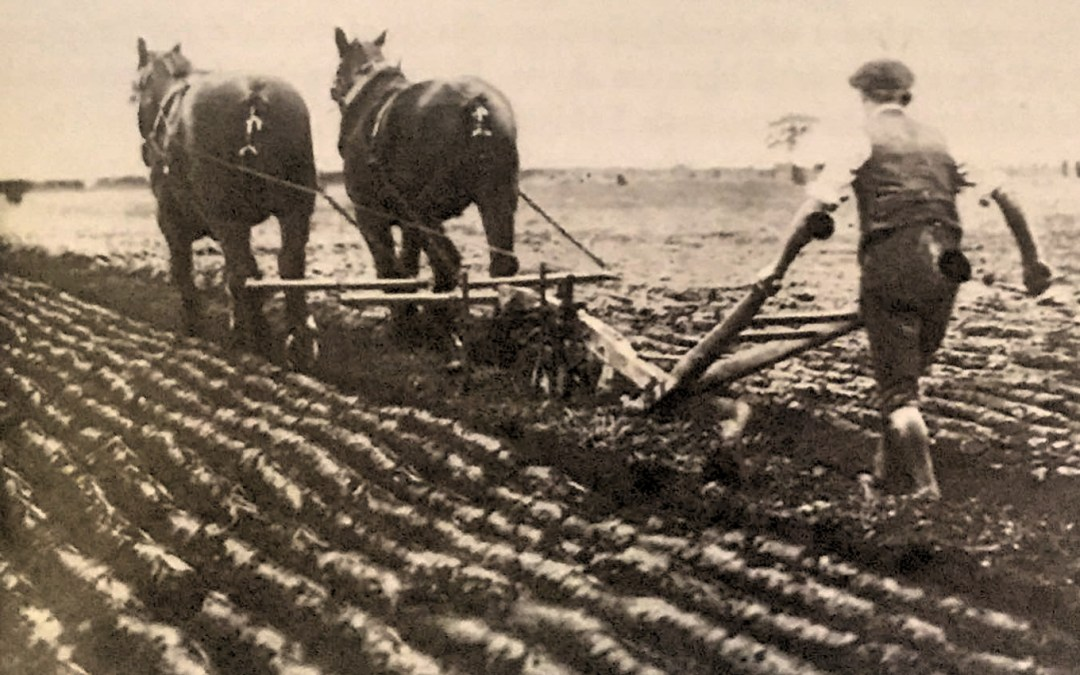 Collection of Farming Photographs in South Holland