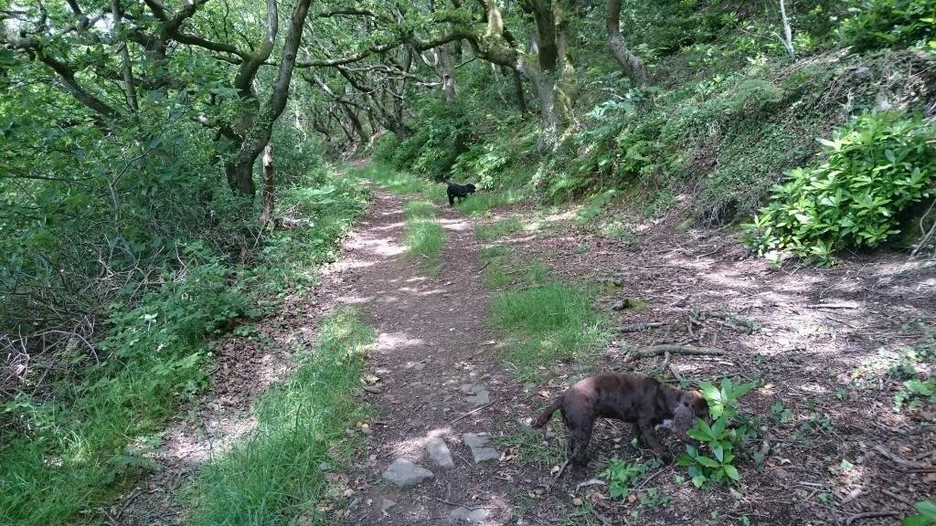 woodlandtrack1