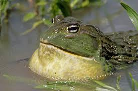 HLS EFS CSC Frog 2
