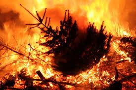 HLS EFS CSC Tree Fire