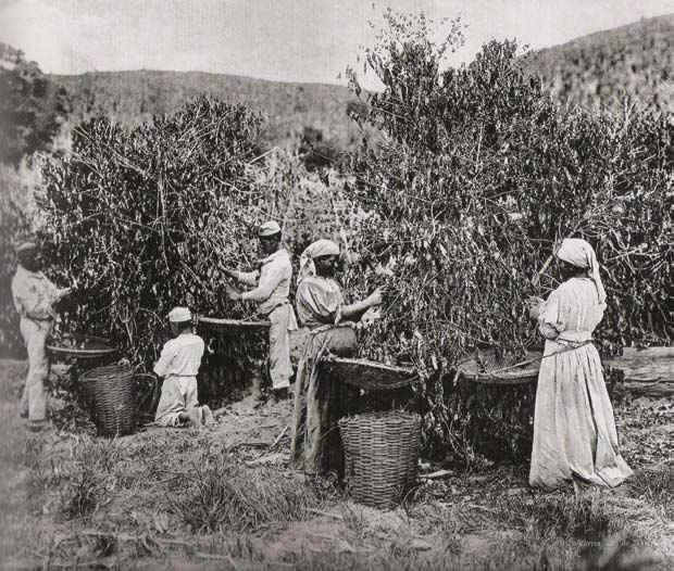 Esclaves dans une plantation de café (Marc Ferrez, 1855, (DR)