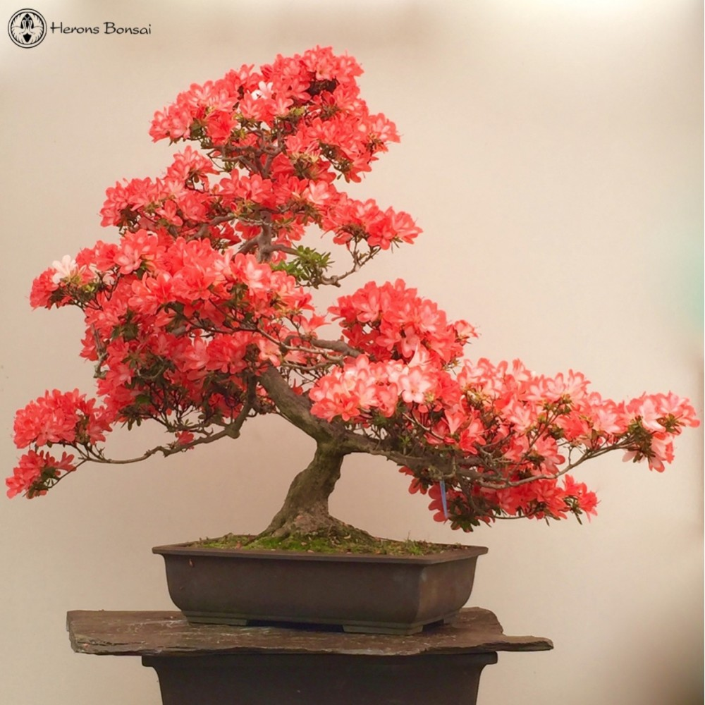 Garden Tree Ornaments