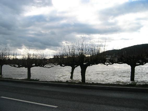 Hochwasser am Rhein am 17. Januar 2004