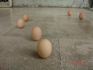 Telur Dapat Berdiri..? a dsc00051 4