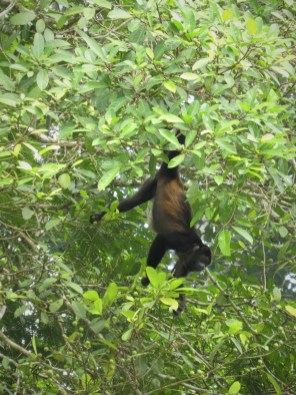 Monkey at Punta Uva Arrecife by hesaidorshesaid