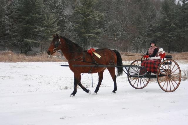 horse-and-buggy-in-winter
