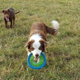 doggiering