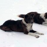 winterdogs