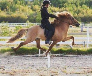 Til hesten