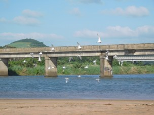 Seagulls at Mtwalume River Lagoon