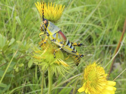 Colorful visitor on the slope of a hill KwaZulu-Natal Southcoast