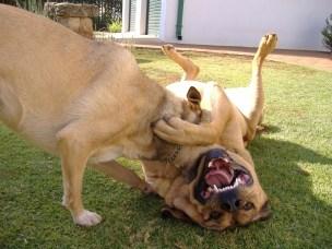 Bazil & Tina - (3)