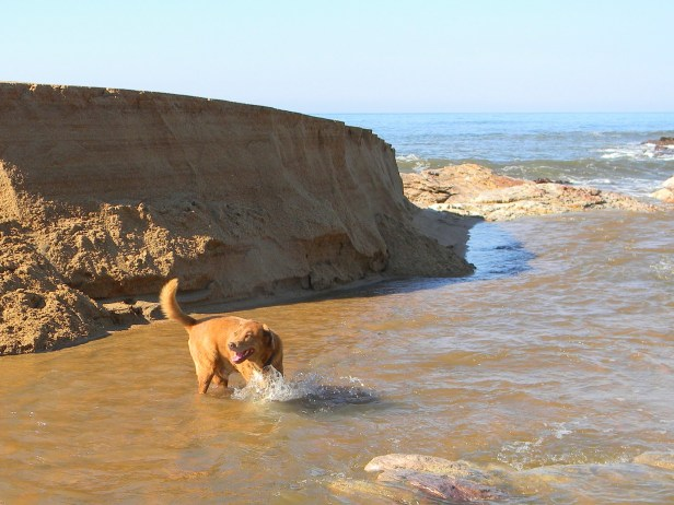 Dog playing in the Mhlangamkulu River mouth