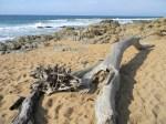 Driftwood on Ifafa Beach