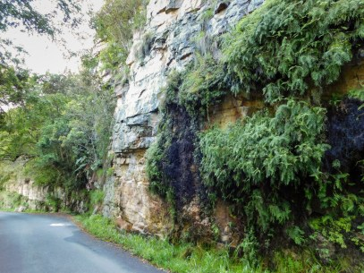 Ferns and moss growing on the cliffs at Oribi Gorge, KwaZulu-Natal
