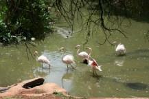 Treehaven Waterfowl Bird Park flamingos