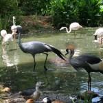 Treehaven Waterfowl Bird Park flamingos, crane and stork