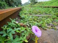 Purple flower growing between the railway tracks