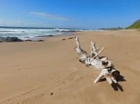 Driftwood on Umzumbe Beach