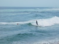 Surfers at Stiebel Point