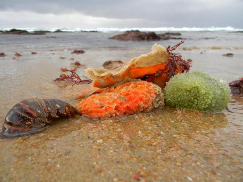 Colourful gifts from the sea