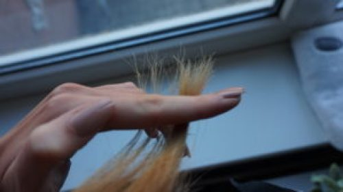 ongeknipt plukje van iris' haar