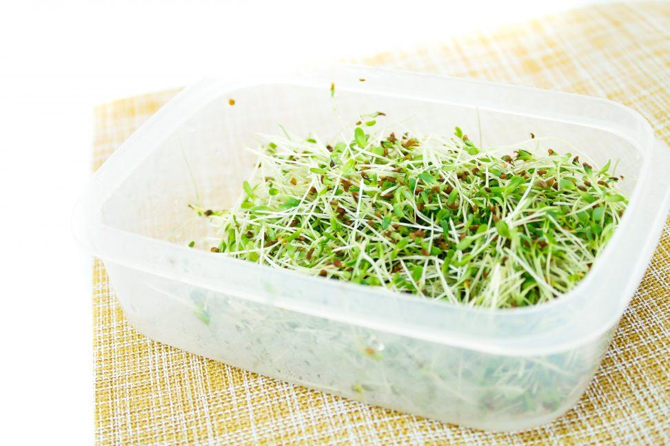 Zelf kiemgroenten kweken – zo makkelijk is het!