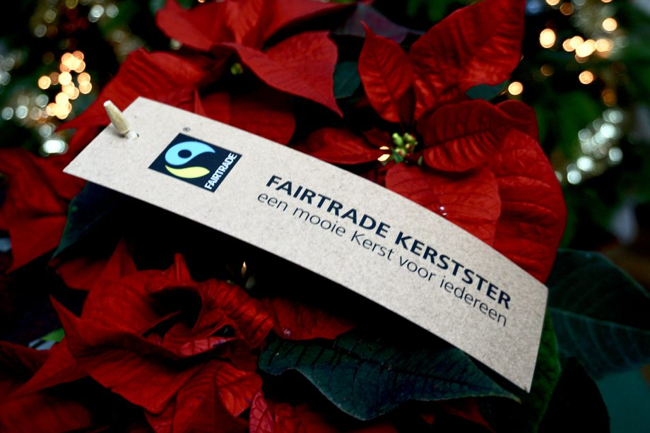 fairtrade kerstster