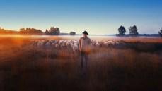 film schapenheld