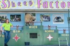 Sheep show op Farm & Country Fair