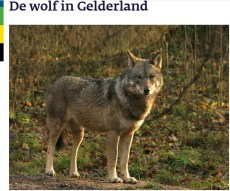 gebeiedsplan preventie wolf