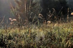 herbes sèches et vie