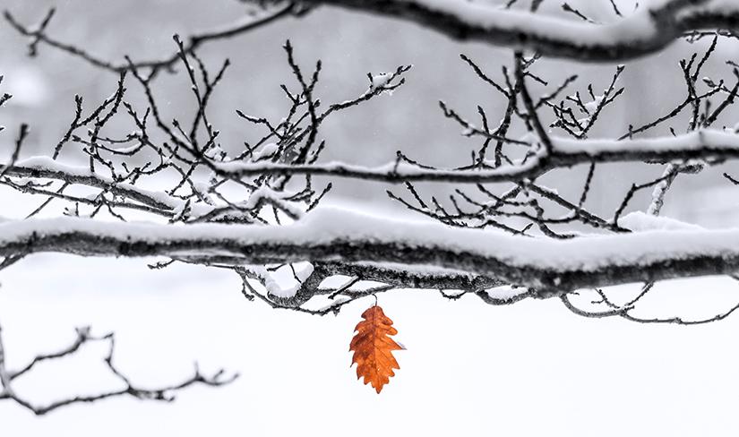 Januar. Brrrr.