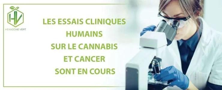Les essais cliniques humains sur le cannabis et le cancer sont en cours