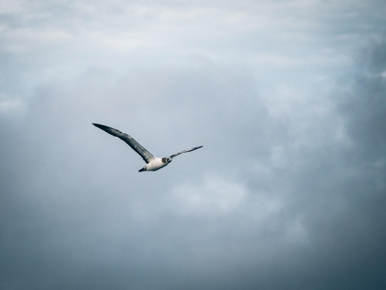 Au milieu de l'océan la nature continue de nous surprendre