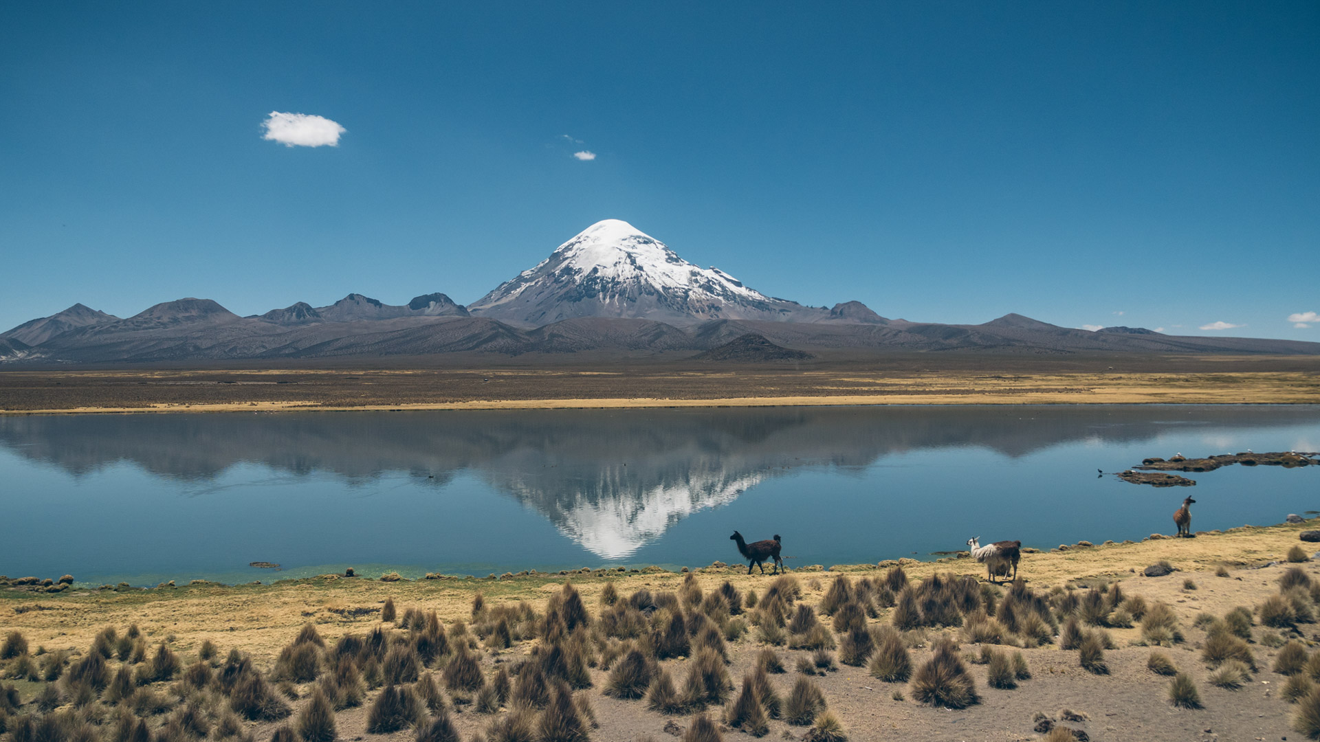 Volcan Nevado Sajama